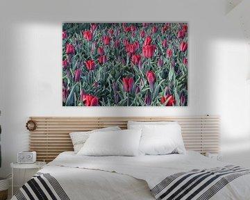 Tulpe von Anne Marie Hoogendijk