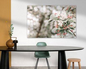 Zweig mit weißer und rosa Blüte von Dennis  Georgiev