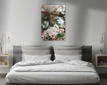 Wit,rood en roze bloesem onder de zonlicht van Dennis  Georgiev