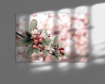 Zweig mit weißer, roter und rosa Blüte von Dennis  Georgiev