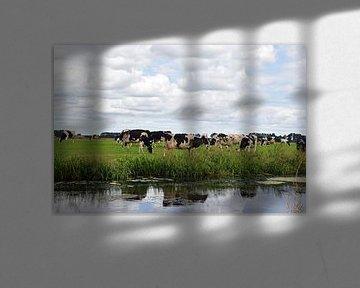 Nederlands landschap met een kudde grazende koeien in een weiland langs de sloot met daarin reflecti van Robin Verhoef