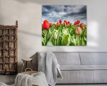 Rote Tulpen 2020 H von Alex Hiemstra