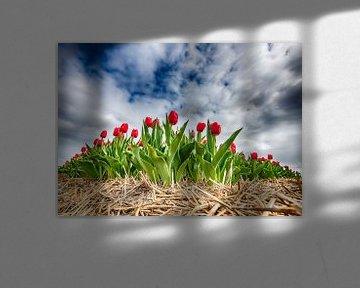 Rote Tulpen 2020 G von Alex Hiemstra