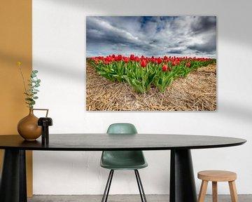 Rote Tulpen 2020 Vorderansicht von Alex Hiemstra