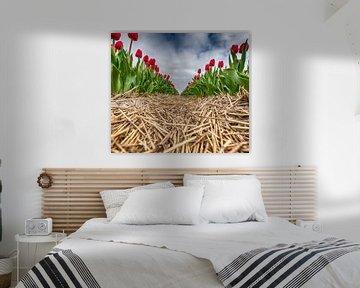 Rote Tulpen 2020 E von Alex Hiemstra