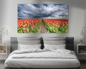 Rote Tulpen 2020 A von Alex Hiemstra