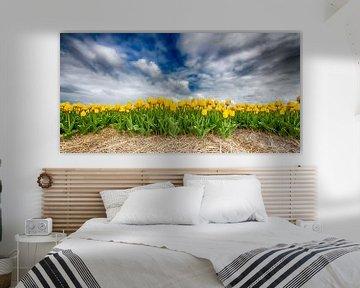 Gelbe Tulpen 2020 A von Alex Hiemstra