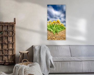 Gelbe Tulpen 2020 B von Alex Hiemstra