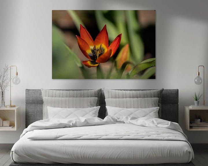 Beispiel: Kleine Tulpenprinzessin von Ingrid Aanen