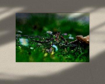 Concept flora : Wildlife von Michael Nägele