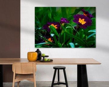 Concept flora : The primroses von Michael Nägele