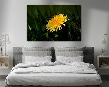 Concept flora : The Dandelion von Michael Nägele