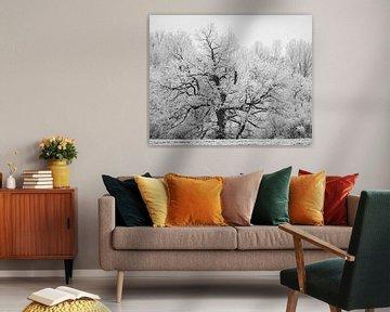 Wintertexturen van Keith Wilson Photography
