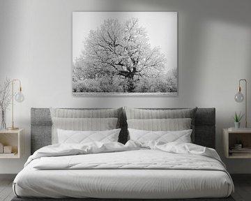 Winters Textuur van Keith Wilson Photography