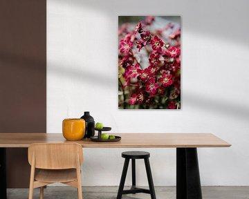 Dunkelrote Frühlingsblume von Carla van Dulmen