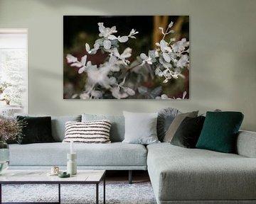 Eukalyptus von Carla van Dulmen
