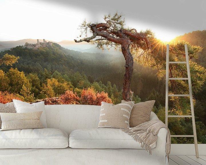 Beispiel fototapete: Am Haferfels im Pfälzer Wald bei Dahn von Jiri Viehmann