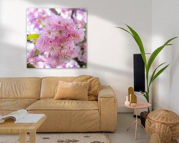Pink Blossom van Caroline Boogaard