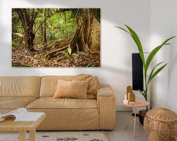Boom met bladwortels in de Surinaamse jungle van Marcel Bakker