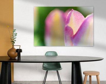 Détail d'une feuille de tulipe sous le soleil de printemps sur Fotografiecor .nl