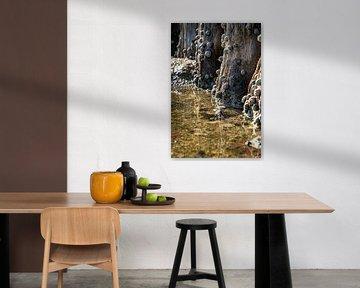 Zeeslakken bij laag water van Fotografiecor .nl