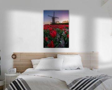 Mühle zwischen den Tulpen von Jacco van Son