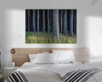Küstenwald an der Ostsee bei Nienhagen von Rico Ködder
