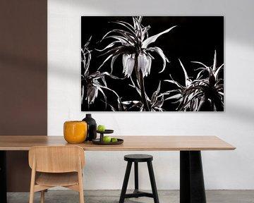 pflanzenblume kaiserkrone schwarz-weiß von Frank Ketelaar