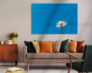 Small ladybirds in a big world sur Elianne van Turennout
