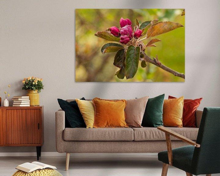 Sfeerimpressie: Roze bloesem bijna bloeiend van de frisse Elstar appel van JM de Jong-Jansen