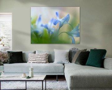 Zachte blauwe wilde bloemen van Carine Belzon