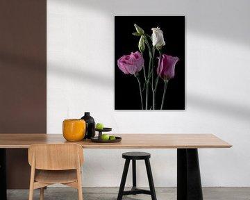Rosa und weiße Prärie-Enziane auf Schwarz von Carine Belzon