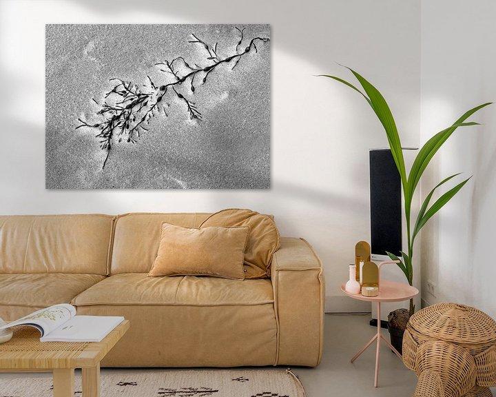 Sfeerimpressie: Ziltig Zeewier (Blaasjeswier in zwart wit) van Caroline Lichthart