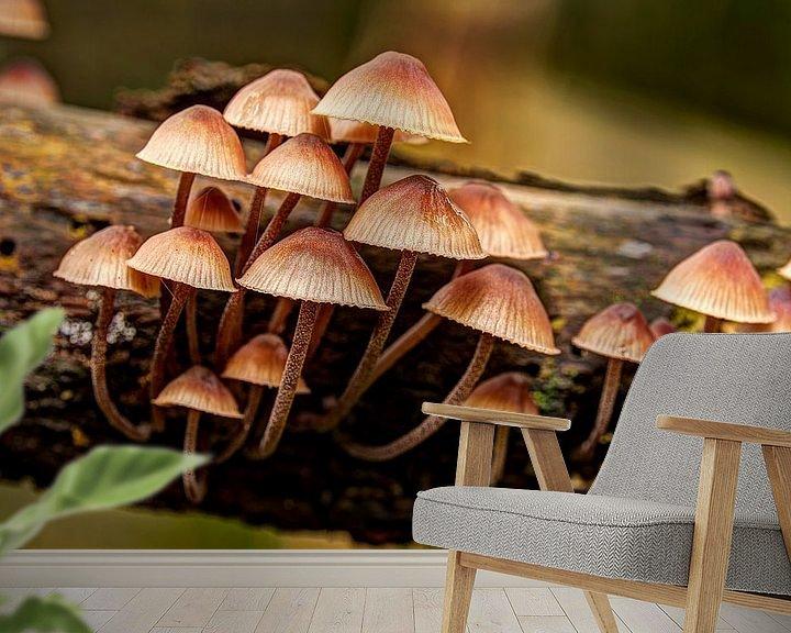 Sfeerimpressie behang: Paddenstoelen van Rob Smit
