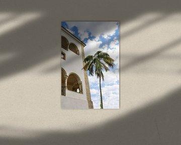 Palmboom in Sintra Lissabon van Celisze. Photography