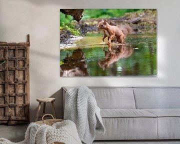 Eekhoorn met reflectie in het water van Merijn Loch