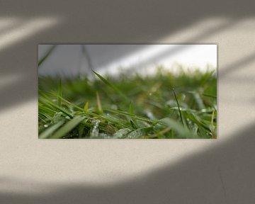 Close-up van ochtenddauw op het gras van Wouter Vriens