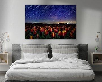 Tulpen, die in der Nacht tanzen von StephanvdLinde