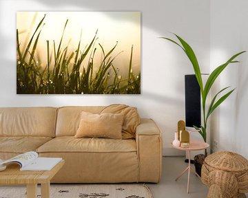 Delicate ochtenddauw op grassen van Tanja Riedel