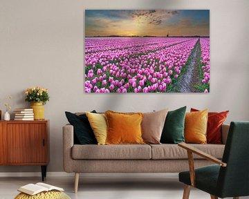 Gekleurde tulpen bij een gekleurde zonsopkomst tijdens de lente van eric van der eijk