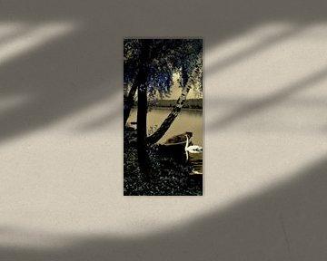 Zwaannacht van Christine Nöhmeier