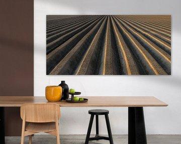 Modèle de champ de pommes de terre avec de la terre formée en bancs pour aider à la croissance optim sur Sjoerd van der Wal