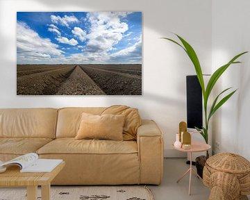 Champ de pommes de terre fraîchement labouré avec un motif en ligne droite et une perspective qui di sur Sjoerd van der Wal