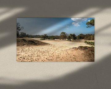 Panorama van de Korte Duinen van Rob IJsselstein