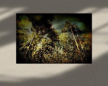 verassend bos van Peter Baak