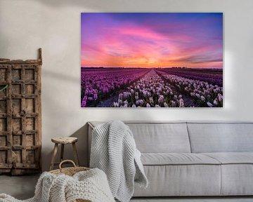 Sonnenuntergang über den Blumenzwiebelfeldern von Marcel van den Bos