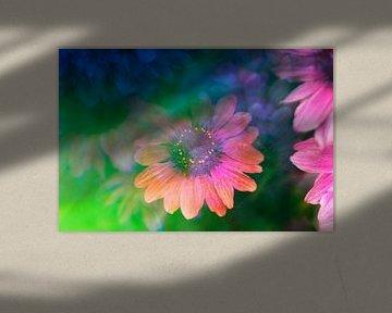 Echinacea gefotografeerd met een prisma van Kaat Zoetekouw