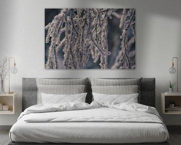 close up van sneeuwvlokken. van Robin van Maanen