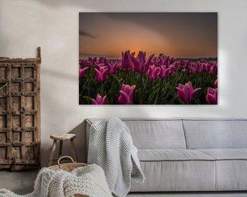 Zonsopkomst tussen de tulpen. van Dirk Keij-Bron