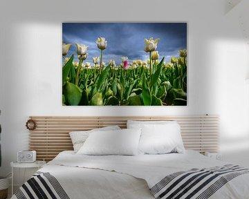 Feld mit blühenden weißen Tulpen und einer rosa Tulpe im Frühling von Sjoerd van der Wal